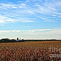 Midwest Farm by Susan Herber