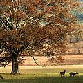 Mighty Oak by TnBackroadsPhotos