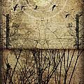 Migration by Jay Hooker