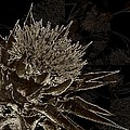Milk Thistle In Sepia by Shirley Sirois