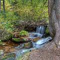 Millcreek Stream by Shirlene Davis