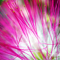 Mimosa Abstract by Judi Bagwell