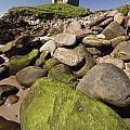 Minard Castle And Rocky Beach Minard by Trish Punch