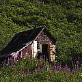 Miners Cabin by Doug Lloyd