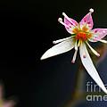 Mini Cactus Flower by Kaye Menner