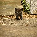 Miniature Stalker by Heather Applegate