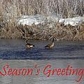 Mirrored Geese Season Greetings by DeeLon Merritt