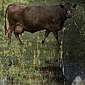 Mirrored Moos  by The Artist Project