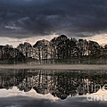 Mirrored Trees by Ann Garrett