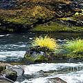 Misery Creek by Betty LaRue