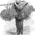 Mistletoe Gatherer, 1894 by Granger