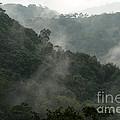 Misty Cloud Forest Matagalpa Nicaragua by John  Mitchell