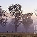 Misty Dawn by Carole Lloyd