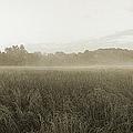 Misty Grounds by Jan W Faul