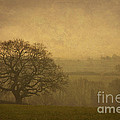 Misty Morning by Clare Bambers