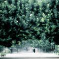 Misty Parisian Park 2 by Mike Nellums