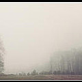 Misty Winter by Kristina Savasta