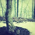 Misty Winter Woods by Jill Battaglia