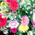 Mixed Asters by Elaine Plesser