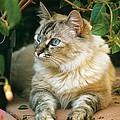 Mixed Breed Cat--mia by Larry Allan