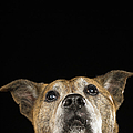Mixed Breed Dog Looking Up by Ryan McVay
