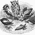 Mollusk by Granger