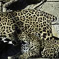 Mom And Baby Cheetah by Trish Tritz