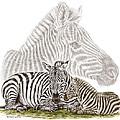 Mom And Baby Zebra Art by Kelli Swan