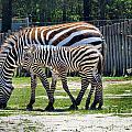 Mom N Baby Stripes by Art Dingo
