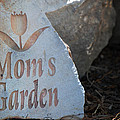 Mom's Garden by Kelly Rader
