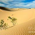 Monahands Sandhills State Park Texas by Matt Suess
