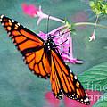 Monarch Butterfly by Betty LaRue