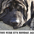 Mondays by Jim And Emily Bush