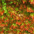 Monet Leaves by Beverly Hanson