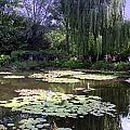 Monet's Water Garden by Donna Walsh