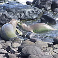 Monk Seals by Mary Deal