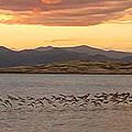 Mono Lake - 14 by Gregory Dyer