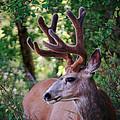 Monster Buck by Steve McKinzie