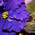 Monster Violet by Susan Herber