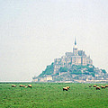 Mont St. Michel by C Sitton