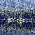 Montana Lake Reflection by Carol Groenen