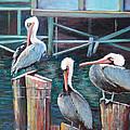 Monterey Pelicans by Stephanie  Maclean