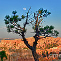 Moon Over Bryce Canyon by Greg Norrell