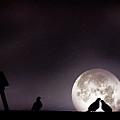 Moon With Love Pigeon by Mhd Hamwi