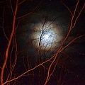 Moonlight By The Camp Fire by Wanda J King