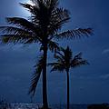 Moonlight Feels Right by Mark Andrew Thomas