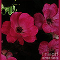 Moonlight Roses by Marsha Heiken