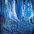 Moonlit Forest by Hakon Soreide