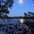 Moonlit Hydrangeas By The Se by John Burk