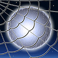 Moonlit Web by Stephen Younts